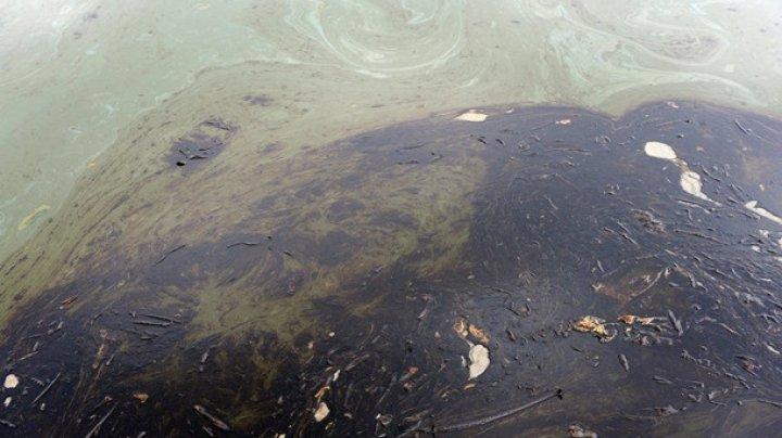 Вблизи Канады разлилась нефть
