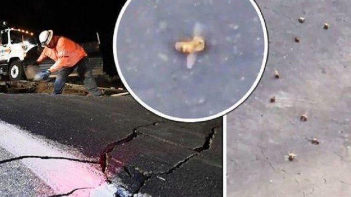 Пчелы погибли в Калифорнии после землетрясения