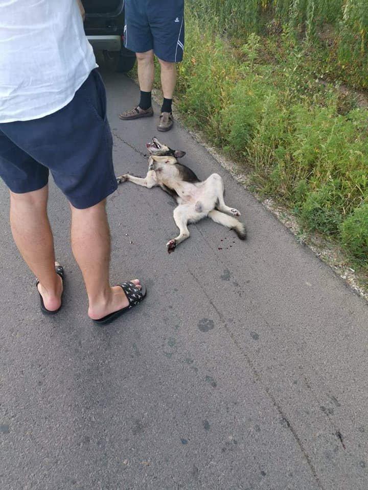Безграничная жестокость: Священник Геннадий Вэлуцэ, привязывал собаку к машине и тащил за собой (фото)