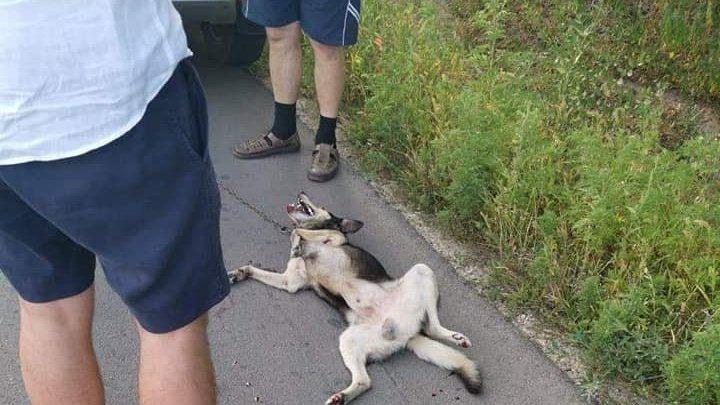 За жестокое издевательство над собакой, священнику Вэлуцэ грозит штраф в 1200 леев