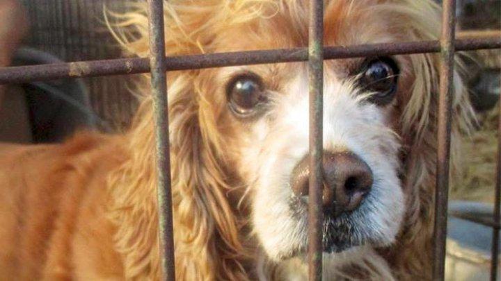В Сеуле прошла акция протеста против поедания и жертвоприношения собак