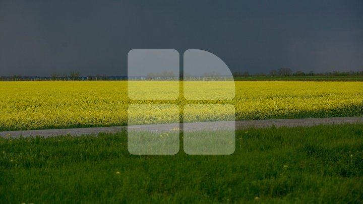 Синоптиками объявлен желтый код в связи с грозовыми дождями и градом