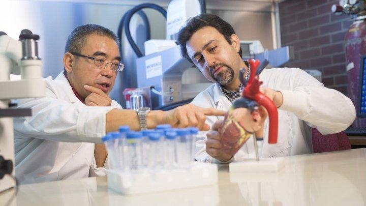 Канадские ученые обнаружили особые клетки, способные лечить поврежденное сердце