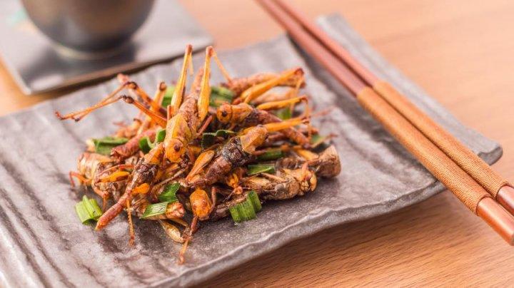 Диетологи опровергли пользу поедания насекомых