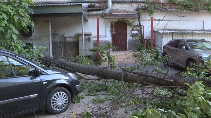 На Рышкановке рухнувшее дерево повредило две машины