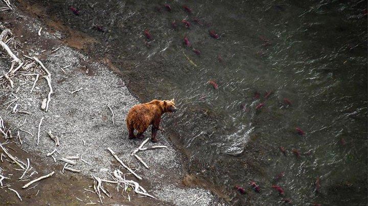 На Камчатке медведи и вороны съели 20-метрового кита