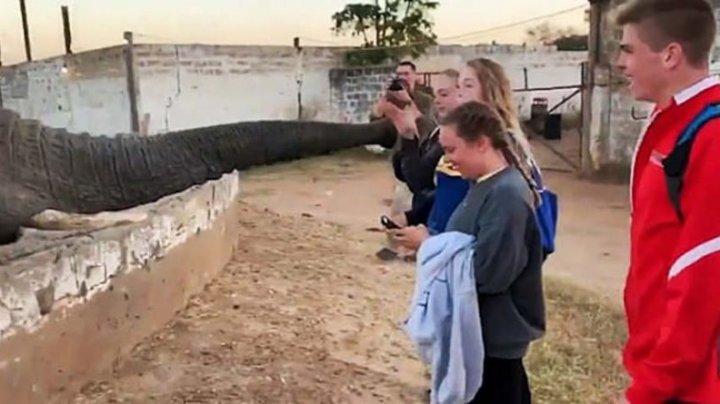 Девушка пыталась сфотографировать слона и получила хоботом по лицу