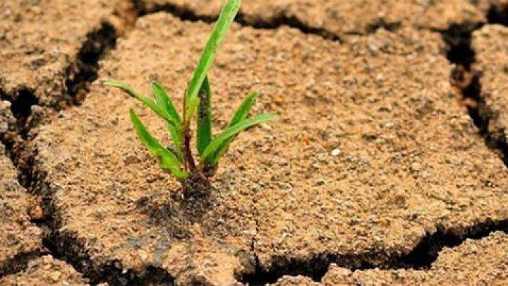 В Литве объявили режим ЧП из-за засухи
