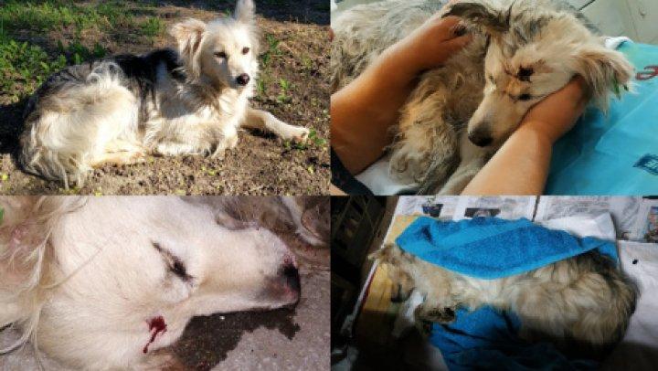 На Ботанике живодер средь бела дня застрелил мирную собаку на глазах у ребенка