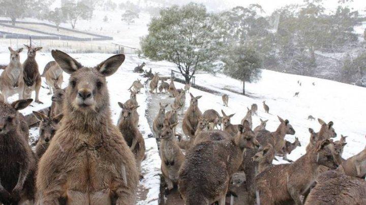 На юго-восточном побережье Австралии впервые за 35 лет выпал снег (видео)