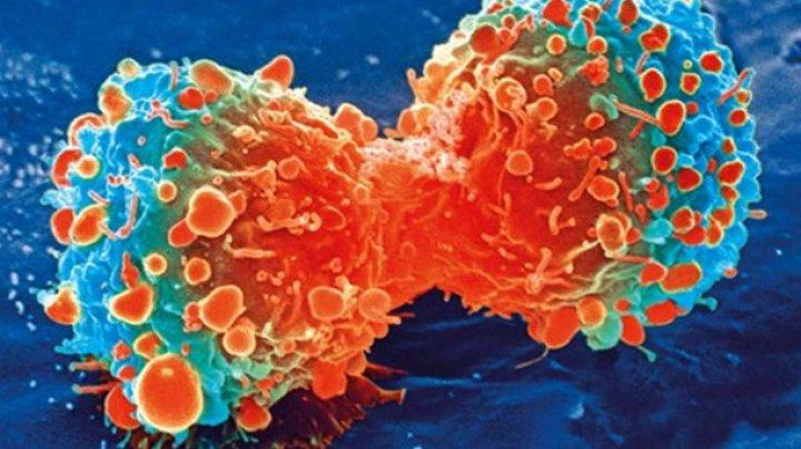 """Найден способ заставить клетки организма """"поедать"""" рак"""