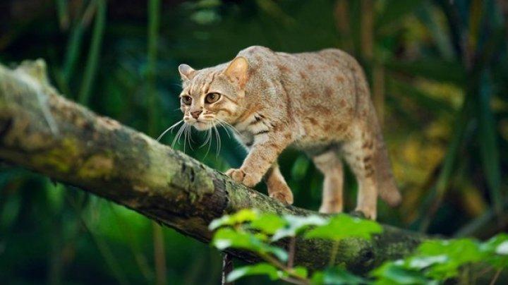 Количество животных в лесах сократилось в два раза - исследование