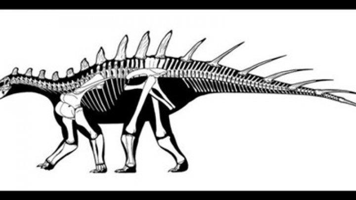 В Африке нашли скелет нового вида динозавров