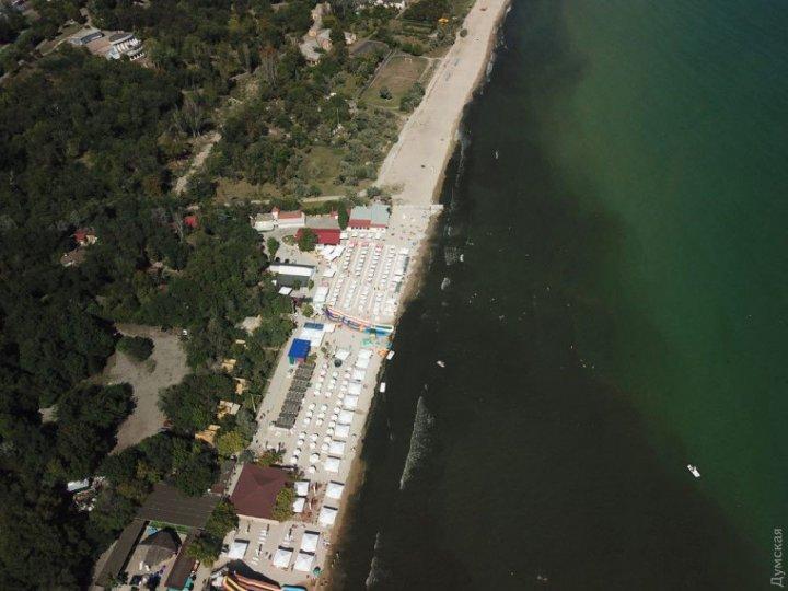На одном из пляжей Одессы почернело море (видео)