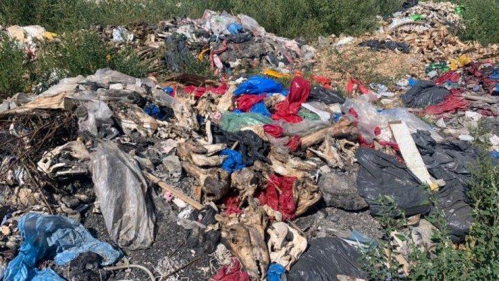 Экологическая катастрофа: На мусорный полигон в Бульбоакэ свозят останки животных