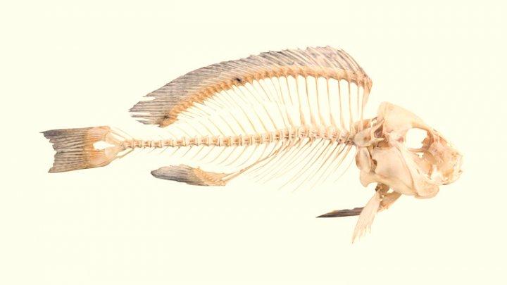 Рыбья кость проткнула кишечник мужчины насквозь
