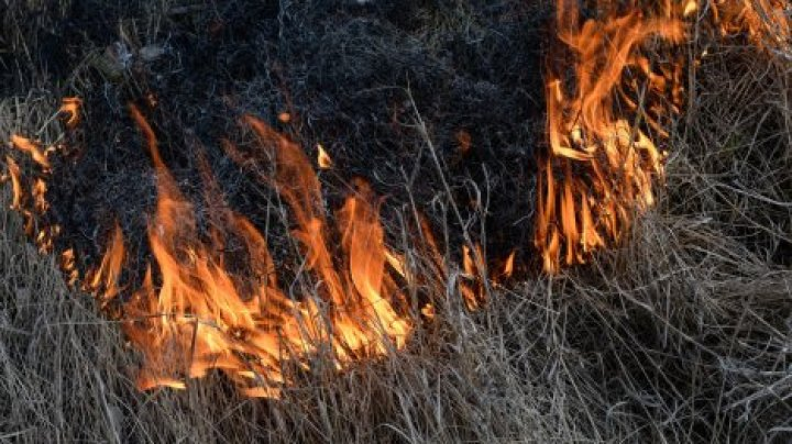 В Молдове объявлена чрезвычайная пожарная опасность