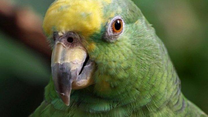В Нидерландах ограбили магазин: полиция задержала попугая (ФОТО)