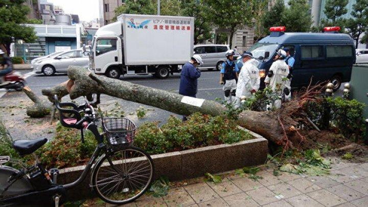 """Из-за тайфуна """"Факсай"""" в Японии без электроэнергии остались 620 тысяч домов"""