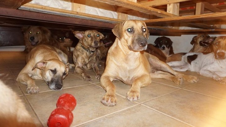 "На Багамах зоозащитница спасла от урагана ""Дориан"" почти сотню собак"