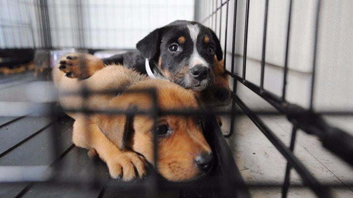 В Молдове процветает черный рынок домашних животных