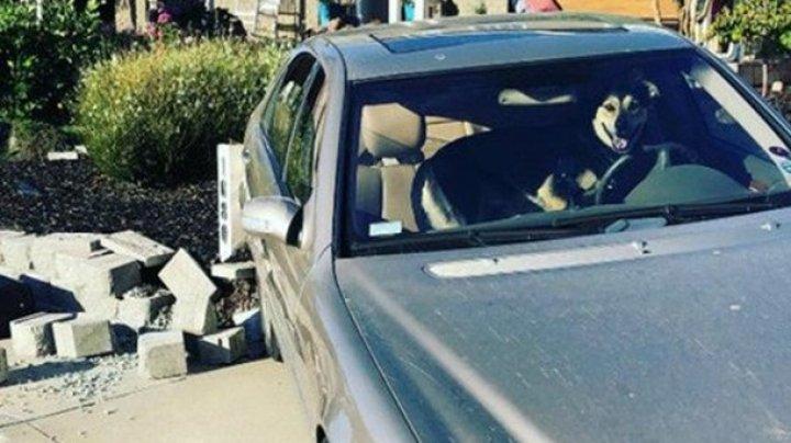 """В США пес """"угнал"""" авто и попал в ДТП"""