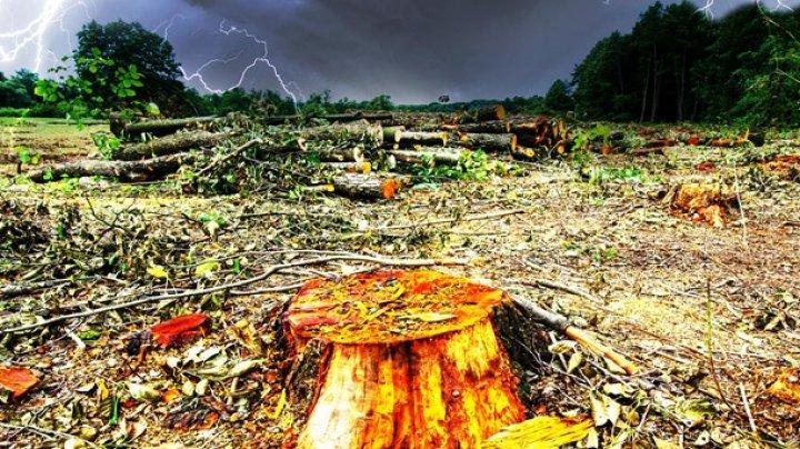 На Земле ежегодно вырубают леса площадью с Британию
