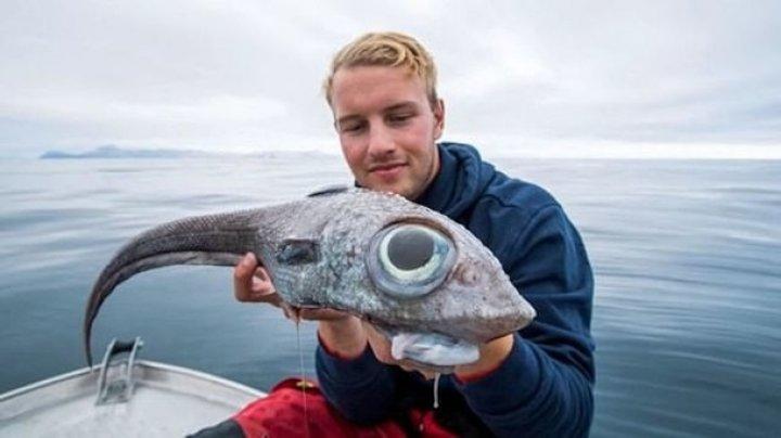 """Рыбак поймал """"глазастого динозавра"""" (фото)"""