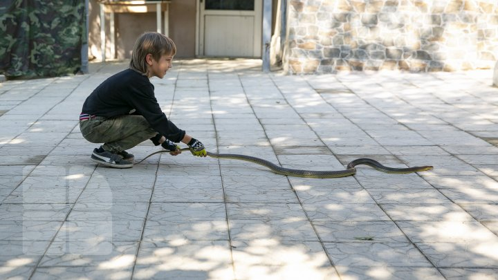 Девятилетний мальчик из Кагула увлекается змеями (ФОТО)
