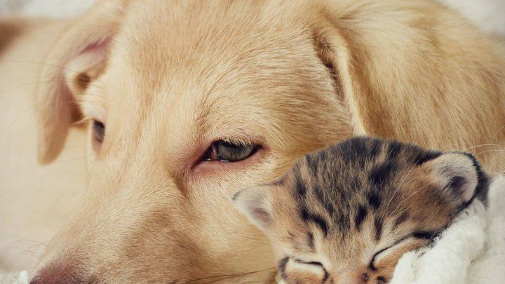 Ветеринары рассказали о первых симптомах болезни сердца у котов и собак
