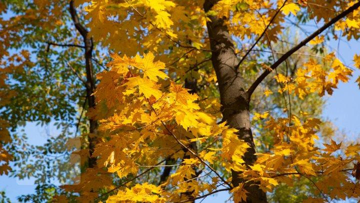 Осеннее равноденствие: дни становятся короче, а ночи – длиннее