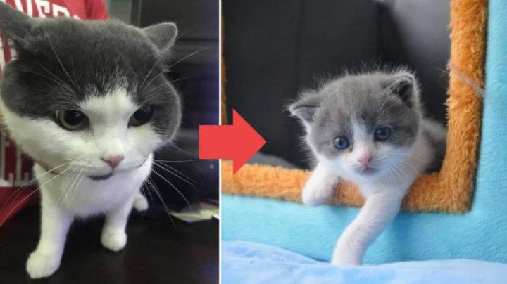 Рождение Чеснока: китаец заплатил за клонирование любимого кота $35 тысяч