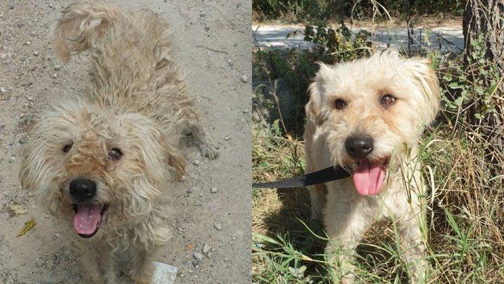 В Сети появились трогательные фото молдавских бездомных животных до и после того, как они обрели дом