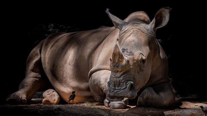 Из зуба носорога выделена самая большая и древняя порция генетической информации