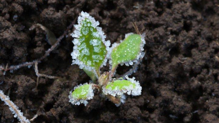 Метеорологи предупредили о заморозках на поверхности почвы