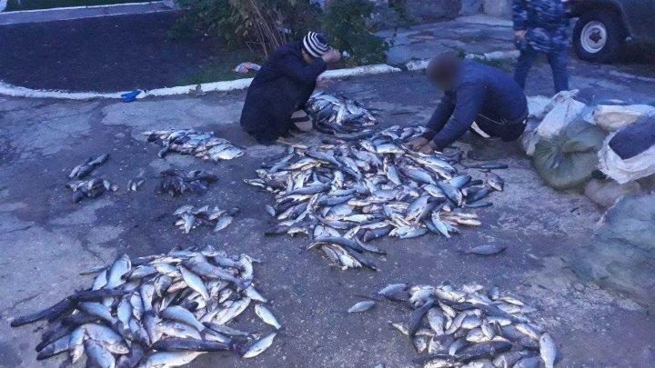 Погранполиция задержала браконьеров, незаконно выловивших 200 кг рыбы в озере Манта