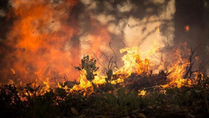 В Австралии из-за засухи вспыхнули леса
