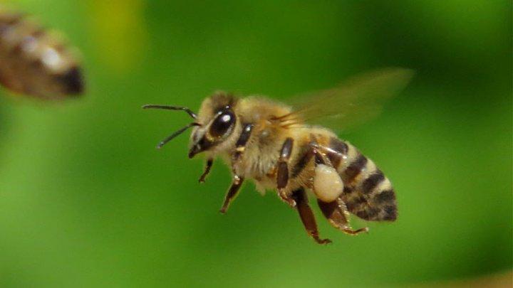 Радиоволны от электронных устройств могут сбивать биологические часы насекомых
