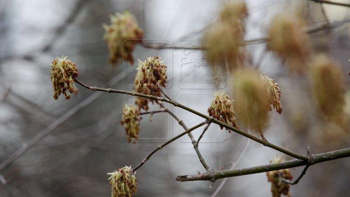Объявлен желтый код метеоопасности в связи с заморозками