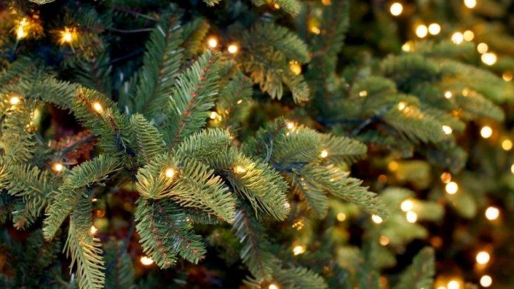 Житель Омска держал новогоднюю елку дома до сентября