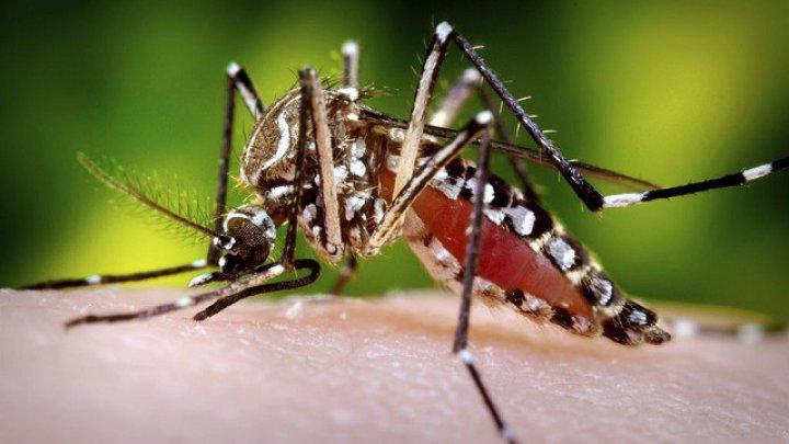 Две смерти, десятки зараженных: комары-убийцы грозят Соединенным Штатам
