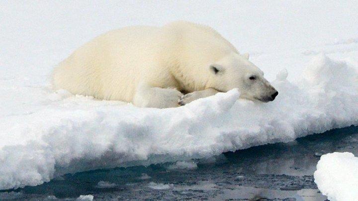 Ученые зафиксировали аномальное таяние арктического льда