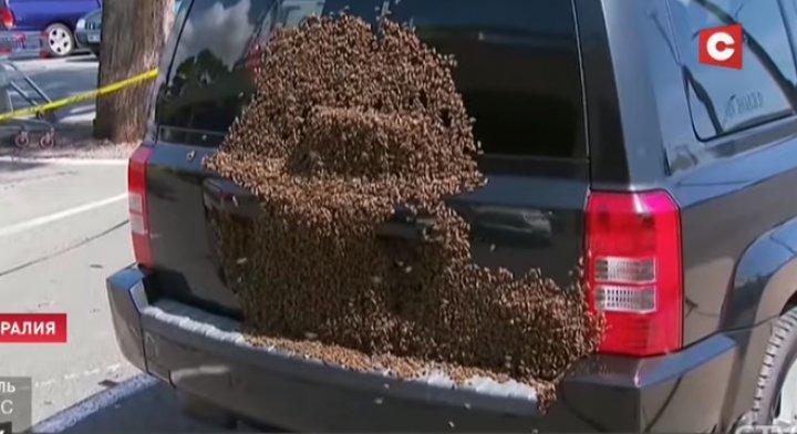 В Австралии пчёлы облепили припаркованное авто (ФОТО)