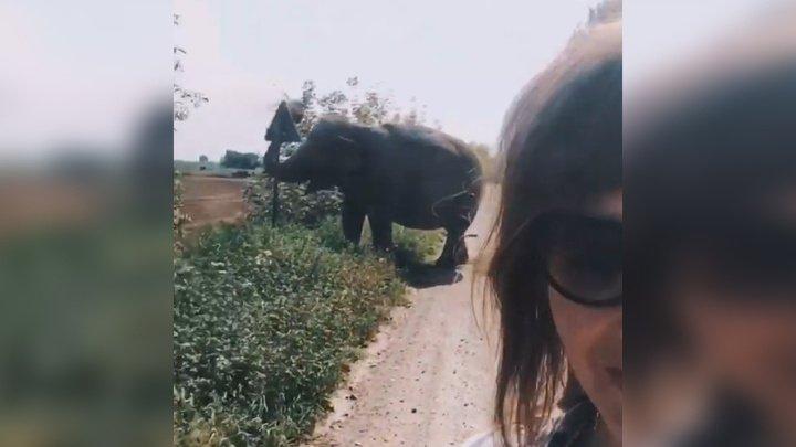 Надоела волокита: слон сбежал в белорусскую деревню и был задержан милиционерами