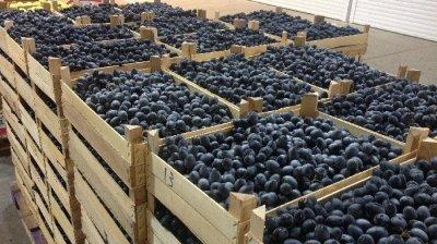 В Россию не пустили почти 40 тонн молдавской сливы и винограда