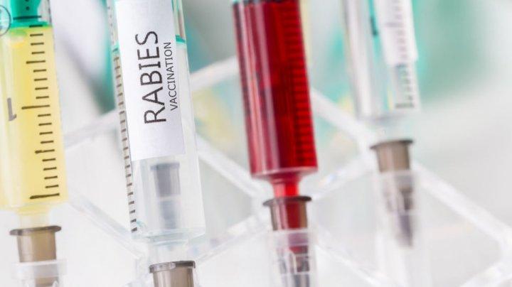 Дефицит вакцины в Бельцах: как объяснили эксперты отсутствие прививок от бешенства