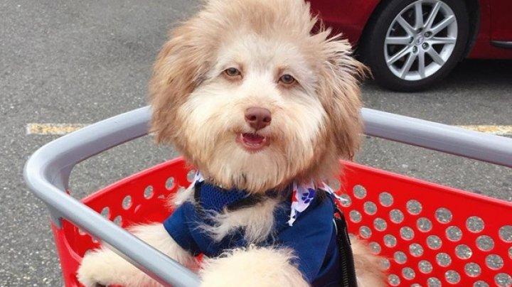 """В сети нашли пса с """"человеческим лицом"""" (ФОТО)"""
