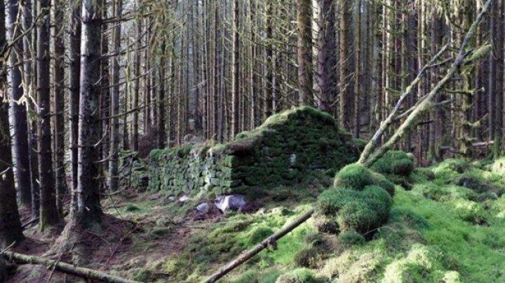 Ученые раскрыли тайну руин в британских лесах