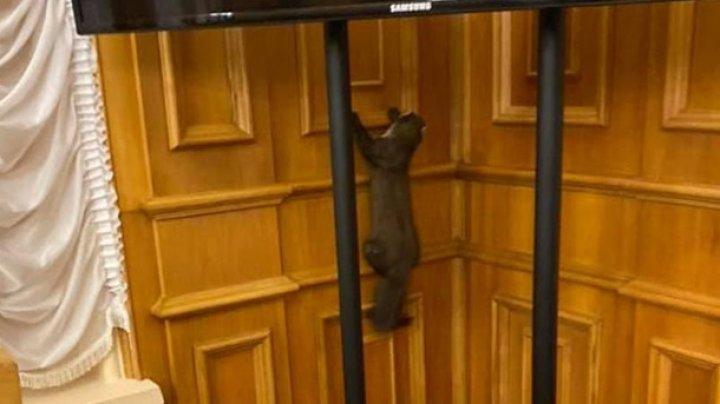 В здание Верховной Рады проник хищный зверь (ВИДЕО)