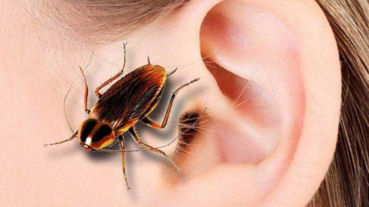 Чудесное избавление: врачи вытащили из уха женщины огромного таракана